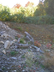 Waiting to be rescued in the gravel pit - hey that looks like a frog, good job it's not a bear.
